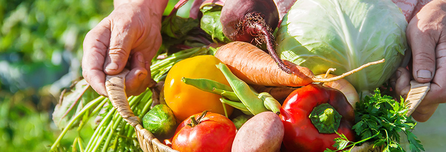Alimentation biologique