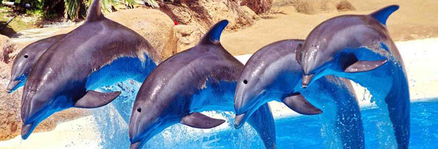 Faire découvrir les dauphins à ses enfants